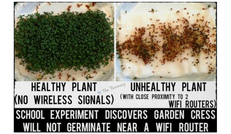 Forget the 5G Debate, Current Wifi May Already Be Killing Us: Consider These Two Enlightening Experiments by High School Students