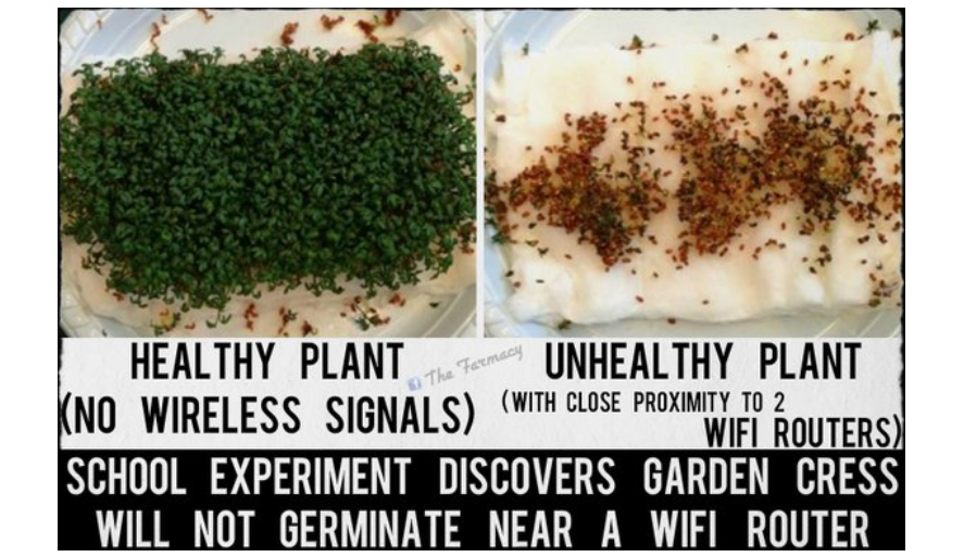Photo of Forget the 5G Debate, Current Wifi May Already Be Killing Us: Consider These Two Enlightening Experiments by High School Students