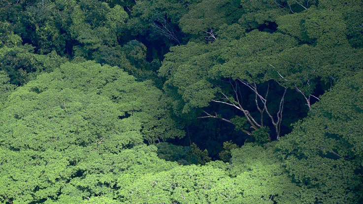 Photo of Bad news for global warming alarmists: Trees and forests increased 865,000 sq. mi. instead of decreased