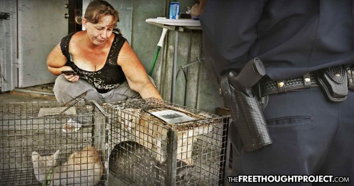 Photo of North Carolina Woman Facing Possible Charges for Rescuing Animals During Hurricane Without a Permit