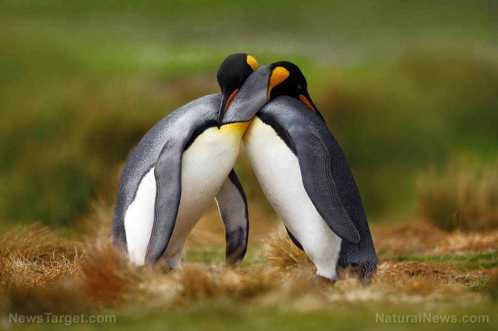"Photo of Disgusting liberals manipulate ""gay"" penguins to push anti-science LGBT agenda"