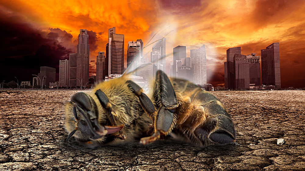 Photo of Insect population COLLAPSE a death warning for all humanity