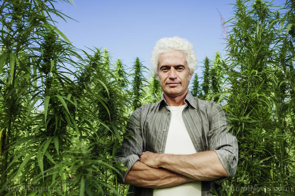 Photo of President Trump just ended hemp prohibition across America, legalizing industrial hemp farming nationwide
