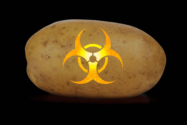 Photo of The Creator of Genetically Modified Potatoes Comes Clean About The Hidden Dangers Of His Creation