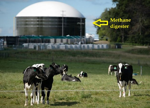 Photo of California dairy farmers must buy multimillion $ cow-manure 'digesters' to comply with climate-change law