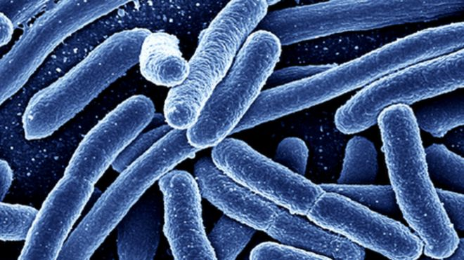 Photo of Mysterious E. coli outbreak spreads to five states; media barely covering it because there's no E. coli vaccine to push