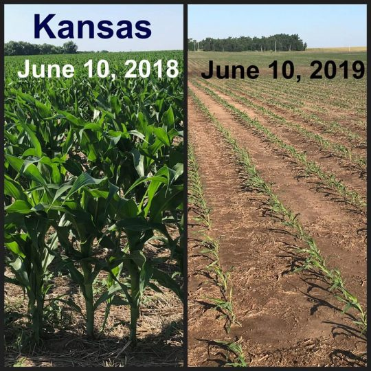 Photo of Shocking Before And After Photos Reveal The Truth About The Widespread Crop Failures The U.S. Is Facing In 2019