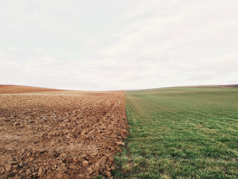According To The Federal Government, 19 Million Acres Of Farmland Were Not Planted With Crops This Year