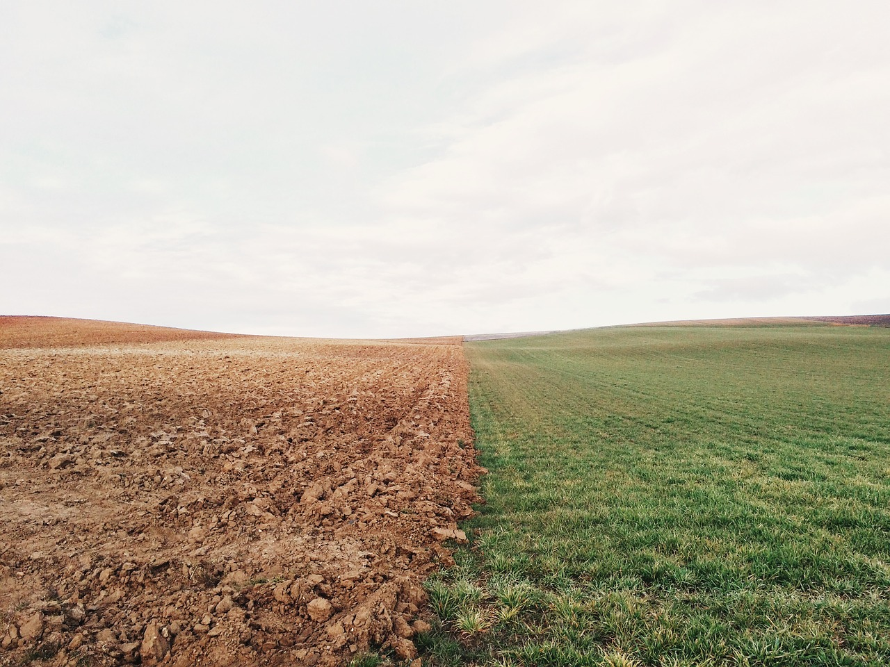 Photo of According To The Federal Government, 19 Million Acres Of Farmland Were Not Planted With Crops This Year