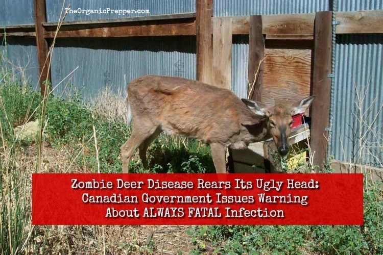 Photo of Zombie Deer Disease Rears Its Ugly Head: Canadian Government Issues Stark Warning About ALWAYS FATAL Infection