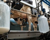 Dean Foods files for bankruptcy as consumers increasingly reject processed cow's milk