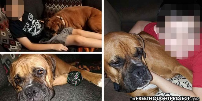Photo of Autistic Boy Heartbroken After Cops Raid Wrong Home, Kill His Boxer Service Dog