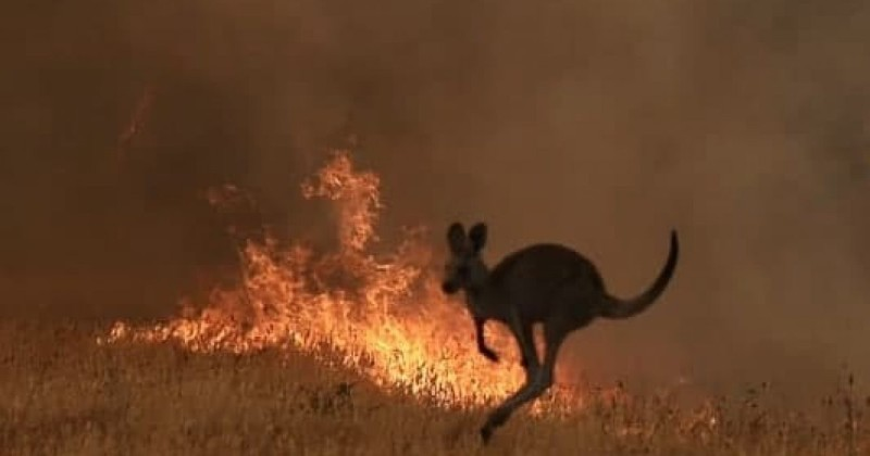 Photo of Climate Change? Nearly 200 People Arrested Across Australia For Deliberately Starting Bushfires