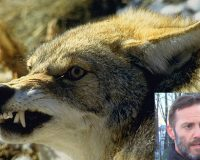 Father Goes Commando on Rabid Coyote to Protect Family