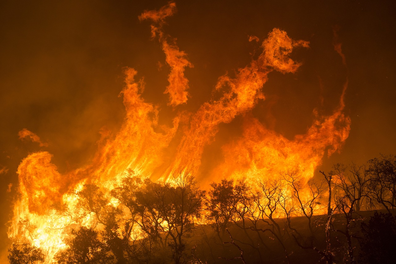 """Photo of 1 Billion Animals Dead: Under A """"Blazing Red Sky"""" In Australia, Apocalyptic Wildfires Are Killing Koalas, Kangaroos And Countless Other Creatures"""
