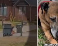 Neighbors Horrified After Cop Caught on Video Repeatedly Stabbing Family's Elderly Dog