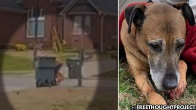 Photo of Neighbors Horrified After Cop Caught on Video Repeatedly Stabbing Family's Elderly Dog