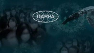 Photo of Bats, Gene Editing and Bioweapons: Recent DARPA Experiments Raise Concerns Amid Coronavirus Outbreak