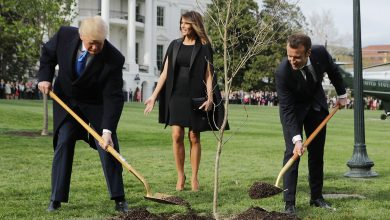 Photo of Liberal Hypocrisy: As Trump Announces Plans to Help Worldwide Effort to Plant 1 Trillion Trees, Liberal Rag Says it 'Might NOT actually be a Good Idea'