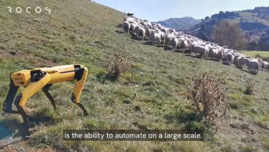 Photo of Robot Dogs Replace K9s Herding Sheep And Help Police Enforce Social Distancing