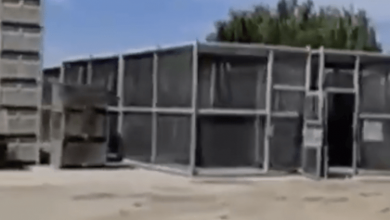 Photo of About Those Rows Of Human Cages In Caruthers, California… (Video)