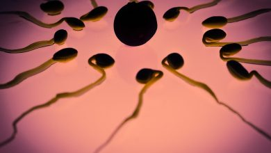 Photo of Sperm from malnourished males transmits information that negatively affects the genetic expression of their offspring