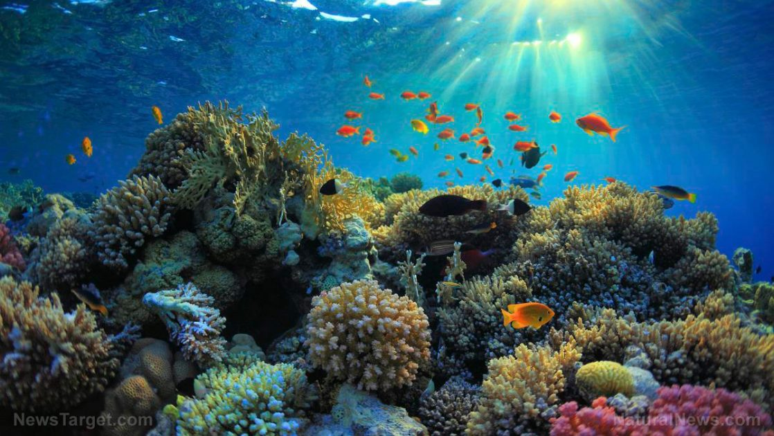 Marine life heading away from the equator could signal global mass extinction, scientists warn