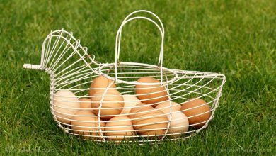 Photo of Farmers now eyeing chicken eggs produced in a sustainable manner